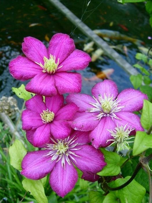 Zaaikalender bloemen, zaaien bloemen, zaden zaaien, kalender, bloemenkalender