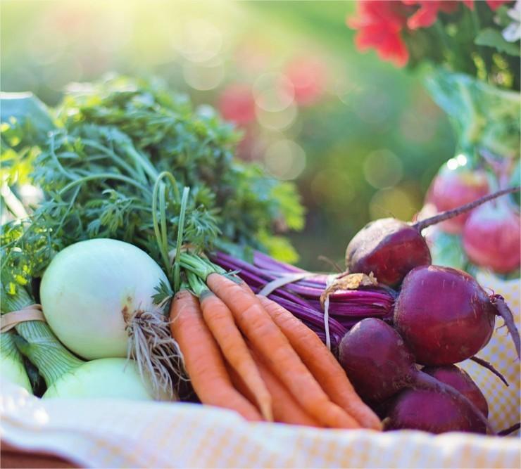 Zaaikalender voor de groententuin, Zaaikalender, groententuin, groenten, zaaien, zaden, zaad, groente, groentes, soorten, zaaitijdstip, zaaidatum, kalender, maan, pillenzaad, zaadjes, tijd, moestuin, volkstuin, serre