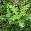 Onkruid in gazon bestrijden, onkruiden verwijderen in gras