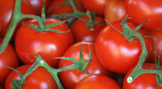 tomaten opkweken, neusrot bij tomaten, tomaten neusrot, bestrijding neusrot, tomatenziekte, tomatenplaag