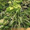verticale tuin, groene wand onderhoud, woonkamerbegroeiing op muur, muurbeplanting verticaal tuinieren