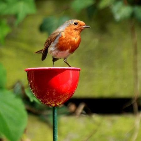 Vogels tellen, vogels voeren, vogeltelweekend, vogelweekend, vogels voederen