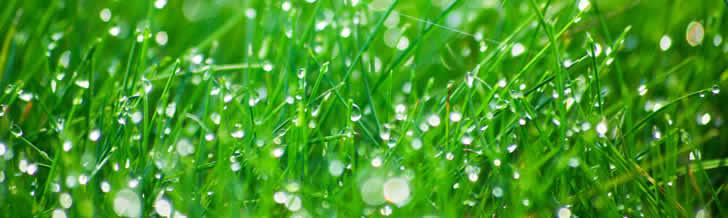 tuinonderhoud mei, vijveronderhoud, gazontips in mei, planten in de moestuin, groenten kweken in mei, gazononderhoud, vijvertips in mei, vijververzorging voor de zomer