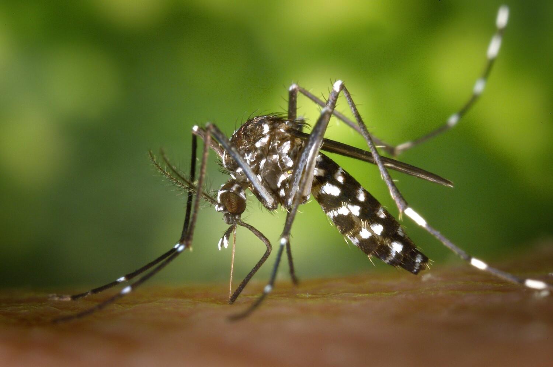 Muggen bestrijden of weren