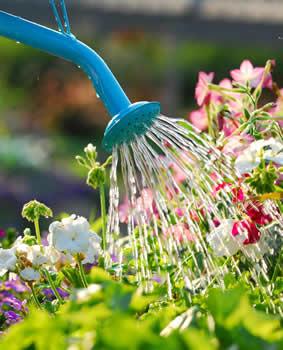 Tuinieren zomer, water geven -kruiden -zomerweer -takken -oogst -tweede -tuinieren -gazon -vruchten -tomaten -fruit -droog -salie -lucht -marjolein -