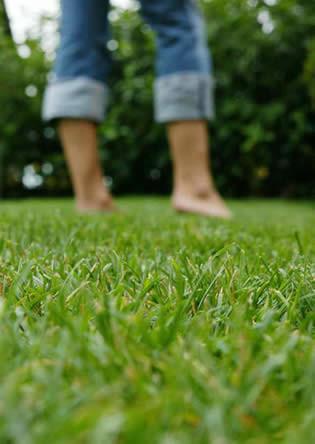Maak uw gazon groen en gezond