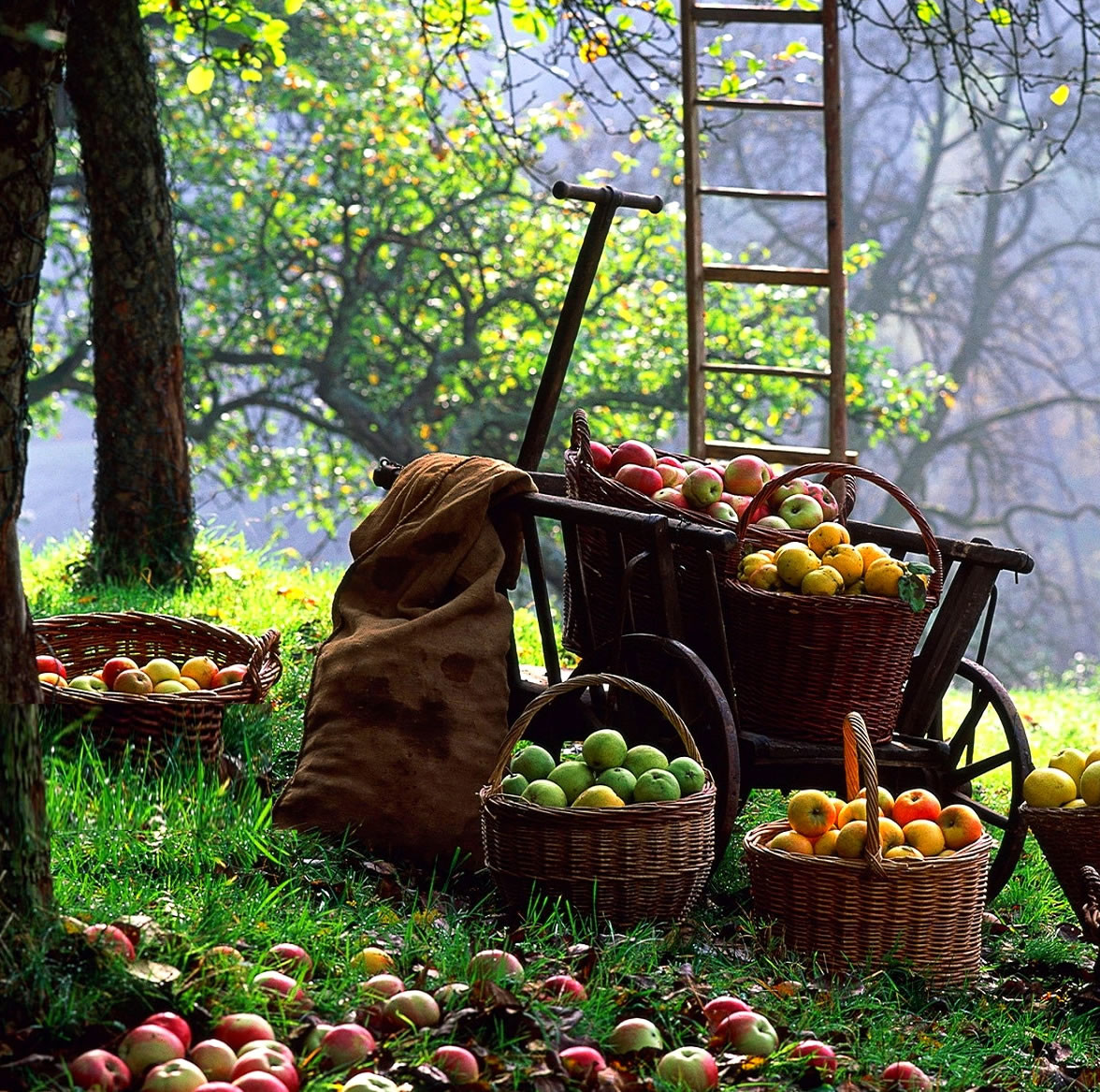 tuinieren, tuin oktober, tips voor tuin, vijvertips, fruittuin, groentetuin