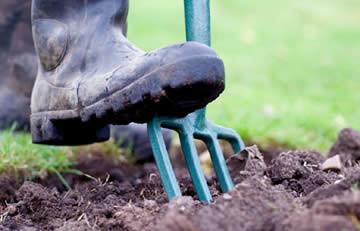 Tuinieren in november, winterklaar maken, tuin, winterbloeiers in de tuin,