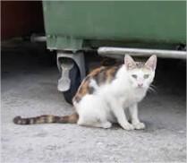 Probleem met zwerfkatten, overlast door straatkatten, kattenoverlast tegengaan, katten verjagen, zwerfkatten weren uit de tuin