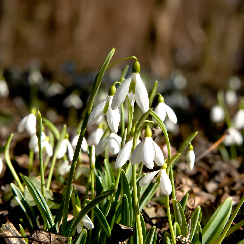 Week 08 - februari: Nu al lente...of toch net niet?