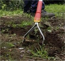 Wat kun je doen in de tuin in februari - welke planten snoeien, planten of zaaien in februari