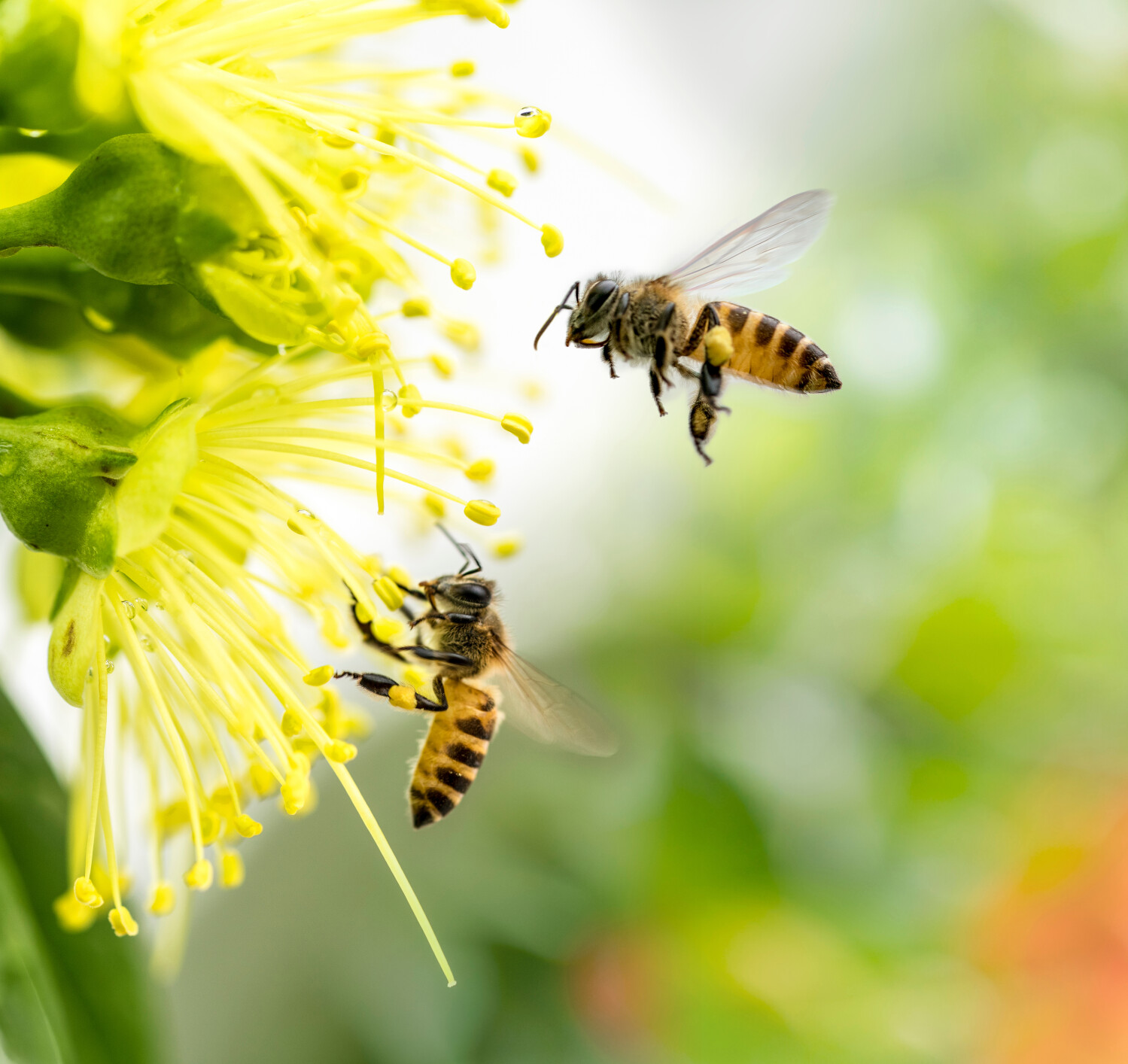 Werken in de tuin, tuinklussen, tuinonderhoud maart, tuinplanning in maart, tuin lenteklaar maken