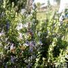Meest voorkomende planten die bloeien in de maand mei