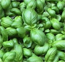 Eenvoudig kruiden kweken - Basilicum telen, Bieslook kweken, Citroenmelisse zaaien en Dragon kweken