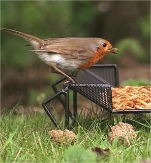 vogels voederen, voeren van vogels, welk voeder voor vogels, wintervoer meesjes, roodborstjes wintervoeder, waarop letten bij voederen vogels, soorten vogelvoeder, voederplank kopen, keuze voederschuren, voederhuisjes winter