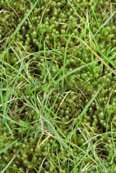 Zeg mos vaarwel, geen mos in het gazon, mos in gras bestrijden, organische meststof voor gazon van DCM, dcm anti mos