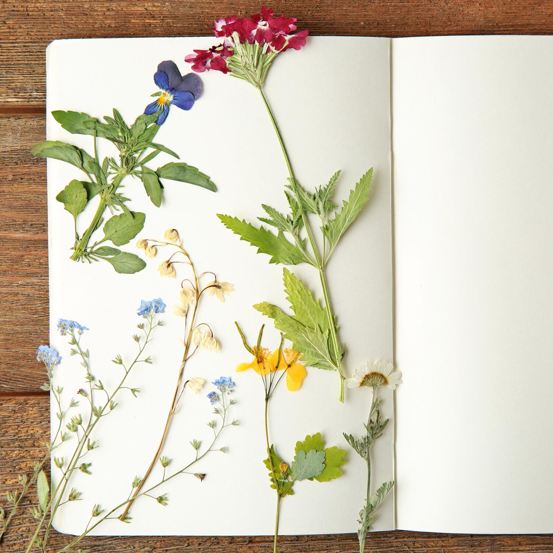 Bloemen drogen, verschillende methodes om bloemen te drogen, bloemen drogen met lucht, bloemen drogen met silicagel, bloemenpers bloemen drogen, bloemen bewaren met glycerine