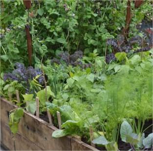 September: oogst er op los, in je vierkante metertuin