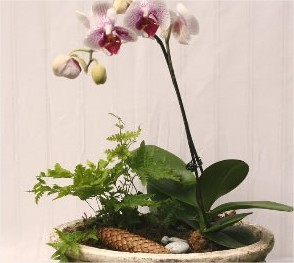 Een ware schoonheidskuur van 4 weken voor kamerplanten en orchideeën
