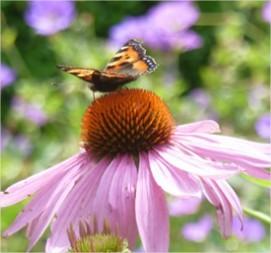 Ecologisch tuinieren, hoe begin je eraan?