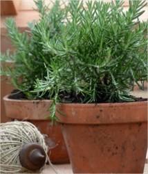 Kruiden die onmisbaar zijn in jouw tuin!