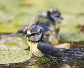 Tips voor een vogelvriendelijke tuin