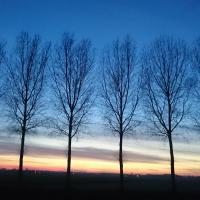 Over bomen: laat de bomen koning zijn!