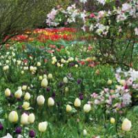 Inspirerende bloembollen combinaties in Sichtungsgarten Hermannshof