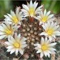 Cactussen als hobby