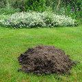 Molshopen in het gazon kunnen ook nuttig zijn
