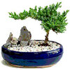 Wat is bonsai?