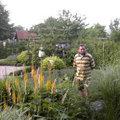 Geschikte tuinplanten kiezen