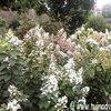 De ecologische tuin aanleggen met aandacht voor de streekeigen planten