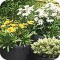 Plantcombinaties op terras - balkon