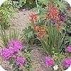 Neem lelijke foto's van de tuin als die in volle bloei staat