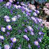 Vaste planten die laat in het jaar bloeien
