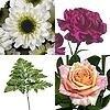 Nieuwe snijbloemen op de markt: anjer, roos, chrysant en varen.