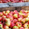 Appels tips en weetjes