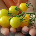 Tomaten en kinderen