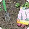 Voorjaarsbloeiende bolgewassen planten