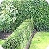 Strakke hagen