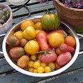 Tomaten tips en weetjes