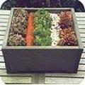 Strakke schikking met vetplantjes