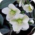 Vaste planten in de winter