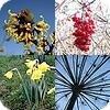 Sfeerbeelden planten en bloemen genomen in de tweede week van januari 2008