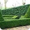 De beste groene hagen en hun voordelen
