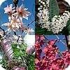Prunus (sierkers, laurierkers,...) met bladverliezers en groenblijvers; met heesters en bomen.