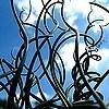 Juncus effusus 'Spiralis' of krulpitrus of kurkentrekkersgras een oeverplant met opvallende blad