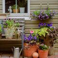 10 tips voor uw terras-, patio-, balkon- en kuipplanten