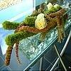 Tafelstuk met Amaranthus maken - in een glazen recipiënt met glazen decoratiestenen